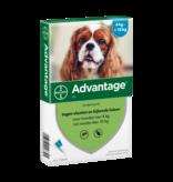 Advantage Advantage Hund
