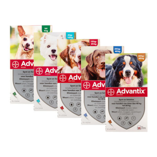Advantix Hund