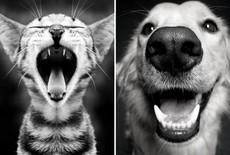Zahnpflege für Hunde und Katzen