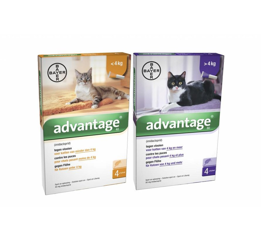 Advantage Katze