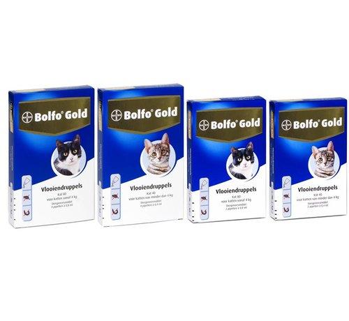 Bolfo Bolfo Gold Katze