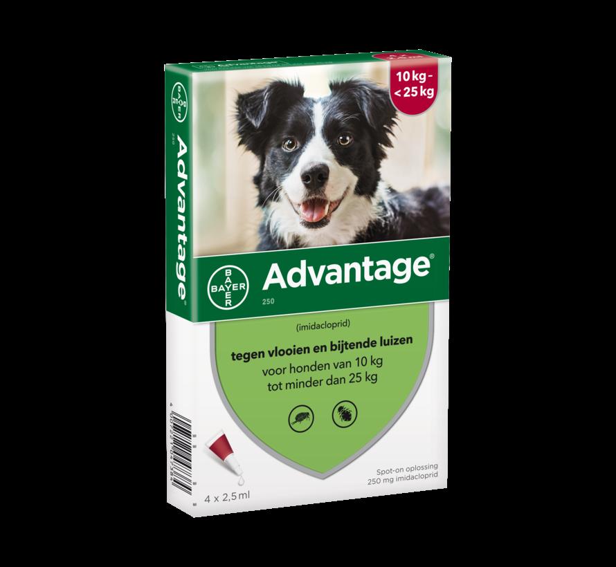 Advantage Hund