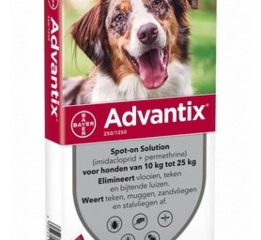 Advantix Hund