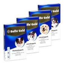 Gold Hund