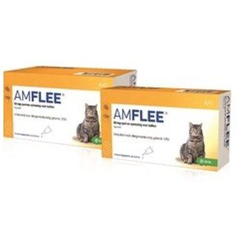 Amflee Amflee Katze