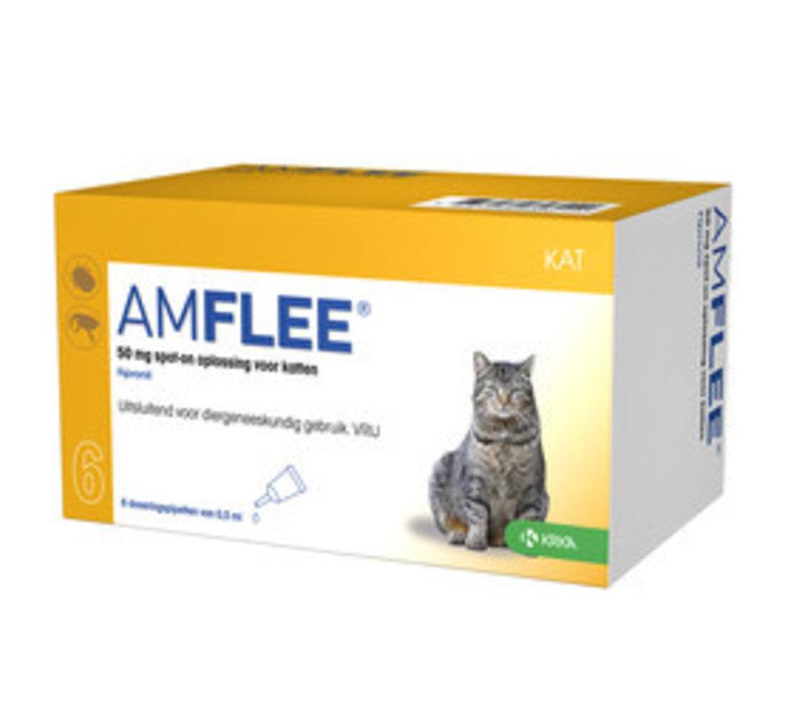 Amflee Katze