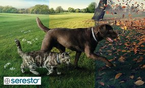 Seresto: The long-lasting solution against fleas and ticks!