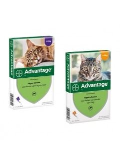Advantage Advantage Cat