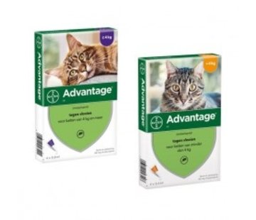 Advantage Advantage Cat
