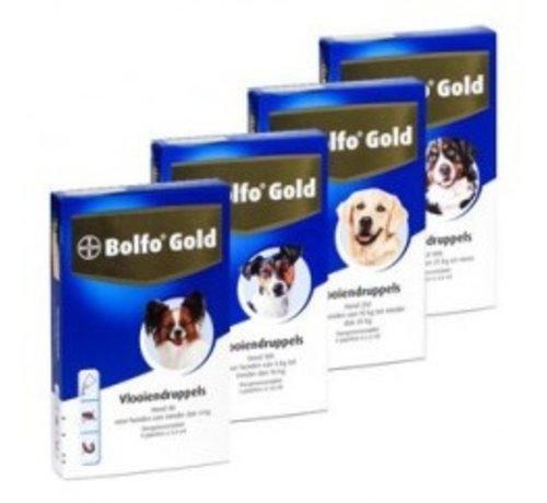 Bolfo Bolfo Gold Dog