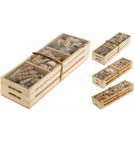 Deco Schelpen in krat 29,5x9x6,5cm. 3 assorti model