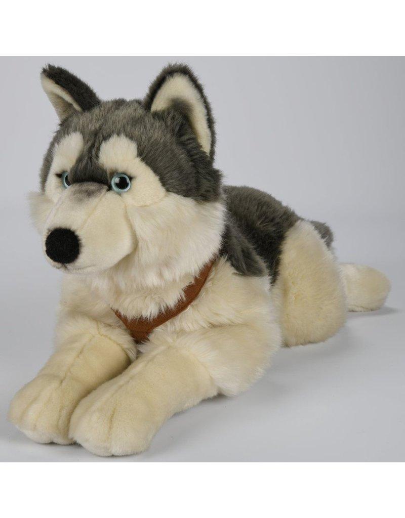 Pluche Husky met riem 62cm.