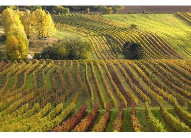 Wijnen eigen import