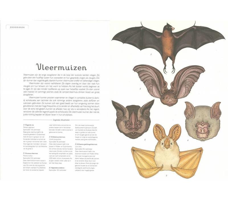 Boek Het dierenboek