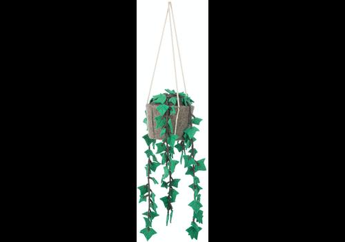 KidsDepot Hanging plant hedera felix