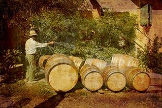 Italiaanse wijn bestellen doe je bij Share Grapes
