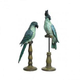 Papegaai blauw met Kuif