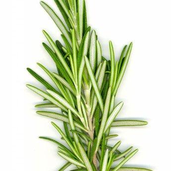 doTERRA Rosemary Essential Oil doTERRA