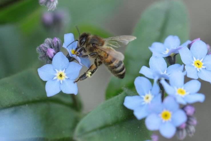 Insectenbeheersing op een natuurlijke manier