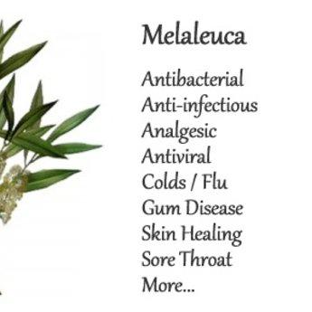 doTERRA Melaleuca Essentiële Olie enkelvoudige olie (Tea Tree)