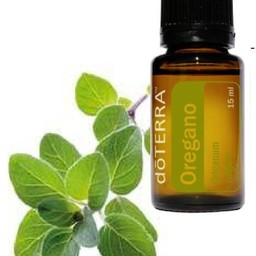 doTERRA Essential Oils Oregano Essentiële Olie