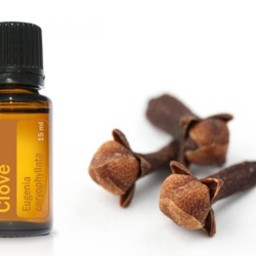 doTERRA Essential Oils Kruidnagel Essentiële Olie