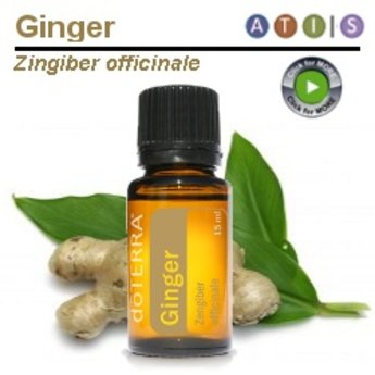 doTERRA Essential Oils Ginger Essential Oil 15 ml.