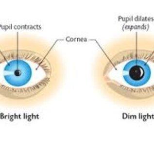 Westmed Praxis diagnostic light