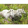 Ravensburger Paarden tussen de bloemen - puzzel van 300 stukjes