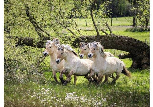 Noorse Fjordenpaarden - 500 stukjes