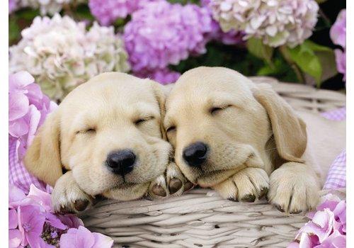 Les chiens dans le panier - 300 pièces