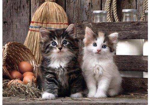Schattige katjes - 1000 stukjes