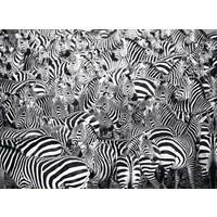 thumb-Zebra Challenge - puzzle of 500 pieces-1