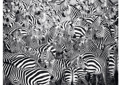 Zebra Challenge - 500 pieces