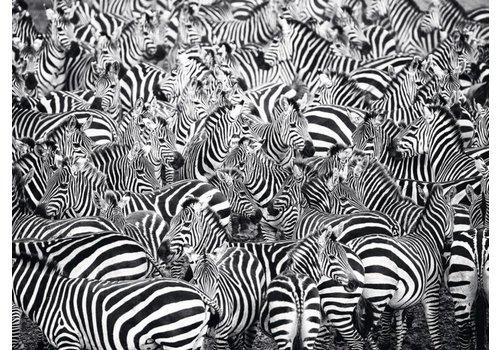 Zebra Challenge - 500 stukjes - exclusiviteit