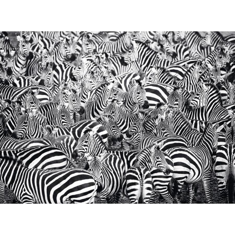 Zebra Challenge - puzzle of 500 pieces-1