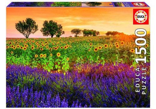 Zonnebloemen en Lavandel - 1500 stukjes