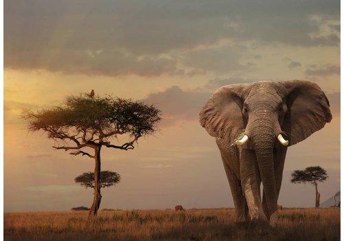 Olifant in Kenia - 1000 stukjes