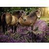 Ravensburger Pony's tussen de hei - 500 stukjes