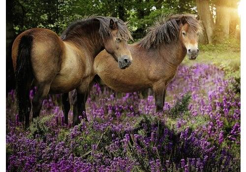 Ponies between the heather - 500 pieces