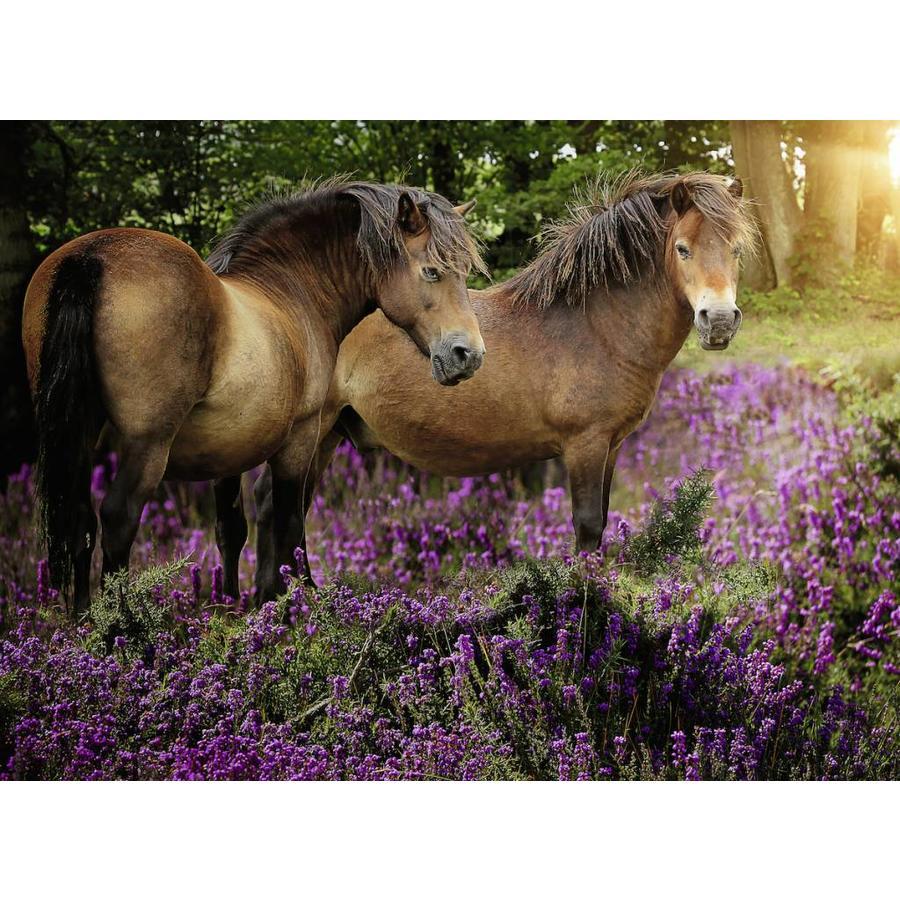 Pony's tussen de hei - 500 stukjes-1