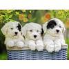 Ravensburger Schattige puppies - 200 stukjes