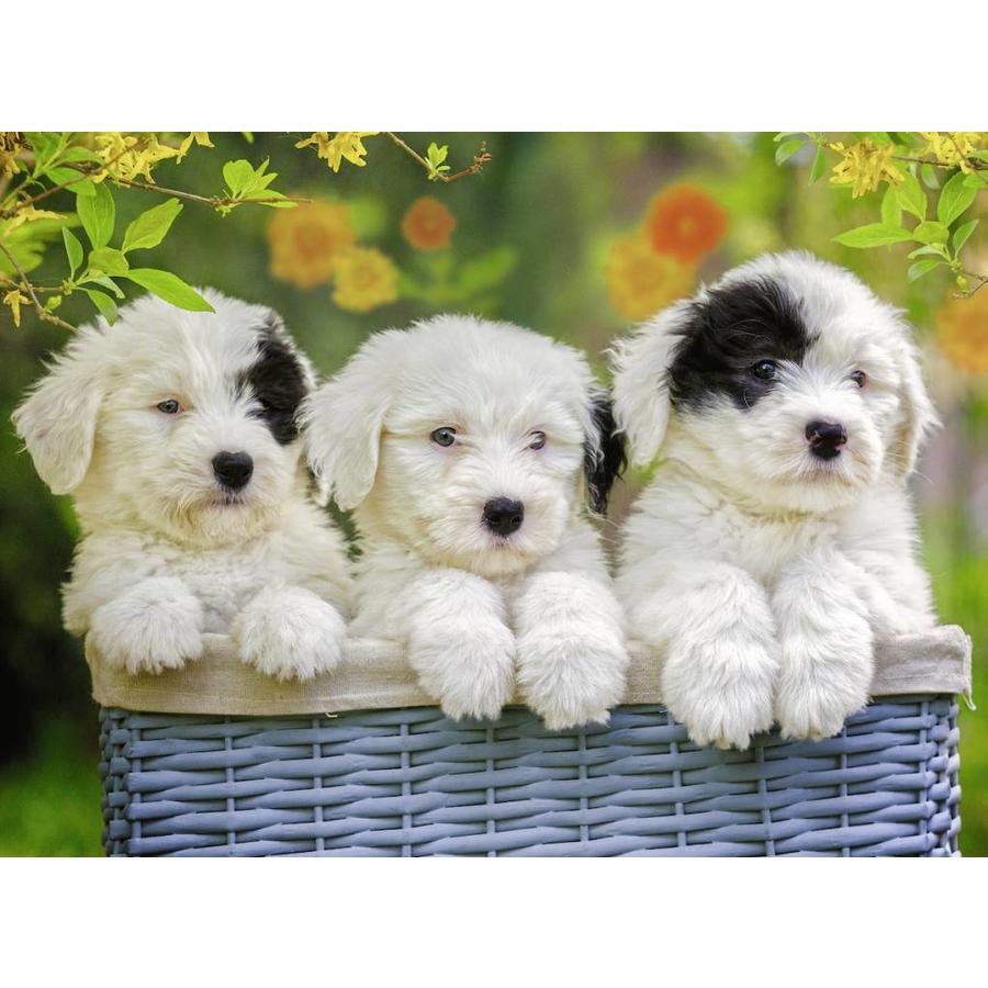 Schattige puppies - 200 stukjes-1