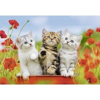 thumb-Kittens on a voyage of discovery - 2 puzzles of 12 pieces-3