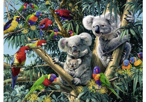 Koala's in de boom - 500 stukjes