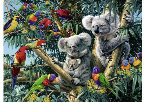 Koalas in the tree - 500 pieces