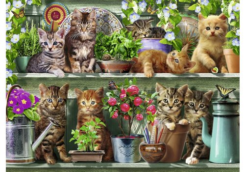 Cats on the shelf - 500 pieces