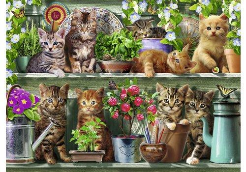 Katjes op het rek - 500 stukjes