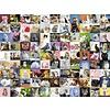 Ravensburger 99 Katten  - puzzel van 1500 stukjes