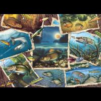 thumb-Allemaal vissen - puzzel van 1000 stukjes-1
